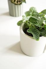 House Raccoon House Raccoon - Noah planter - Silver green