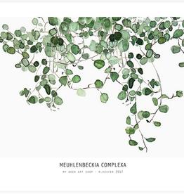My deer art shop My deer art - mini prints - Muehlenbeckia - A5