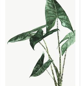 My deer art shop My deer art - mini prints - Alocasia zebrina - A5