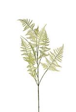 Mr Plant Mr Plant - Asparagus Large