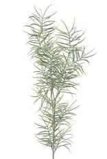 Mr Plant Mr Plant - Asparagus