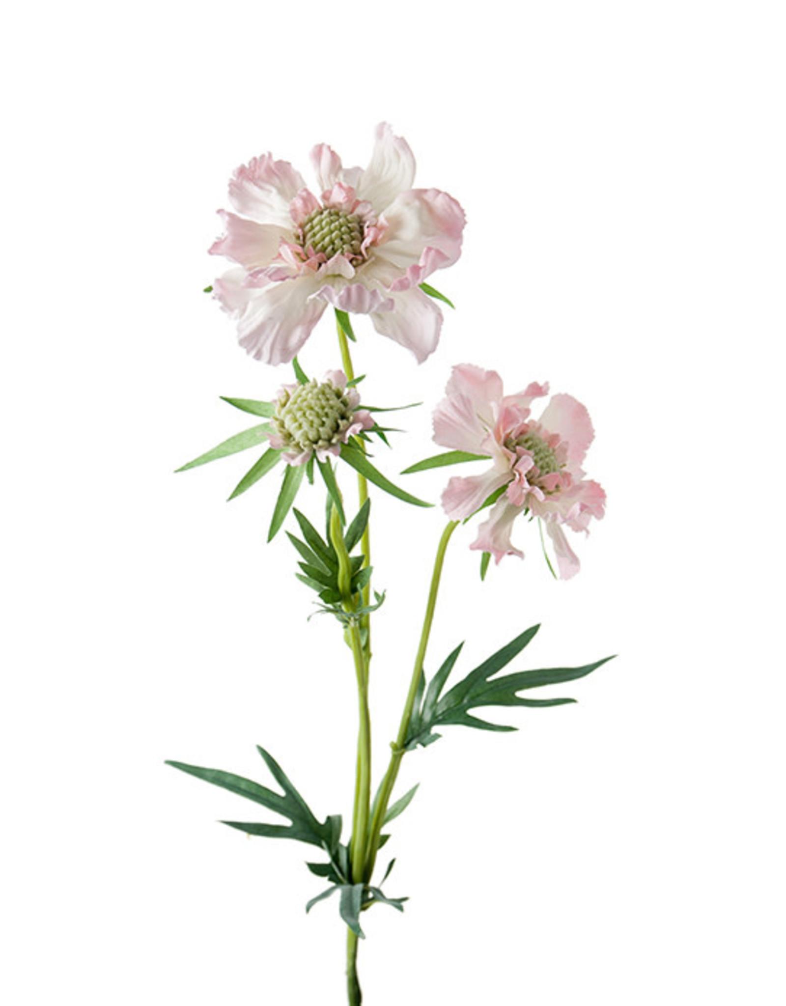 Mr Plant Mr Plant - Scabiosa