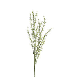 Mr Plant Mr Plant - Eucalytus small