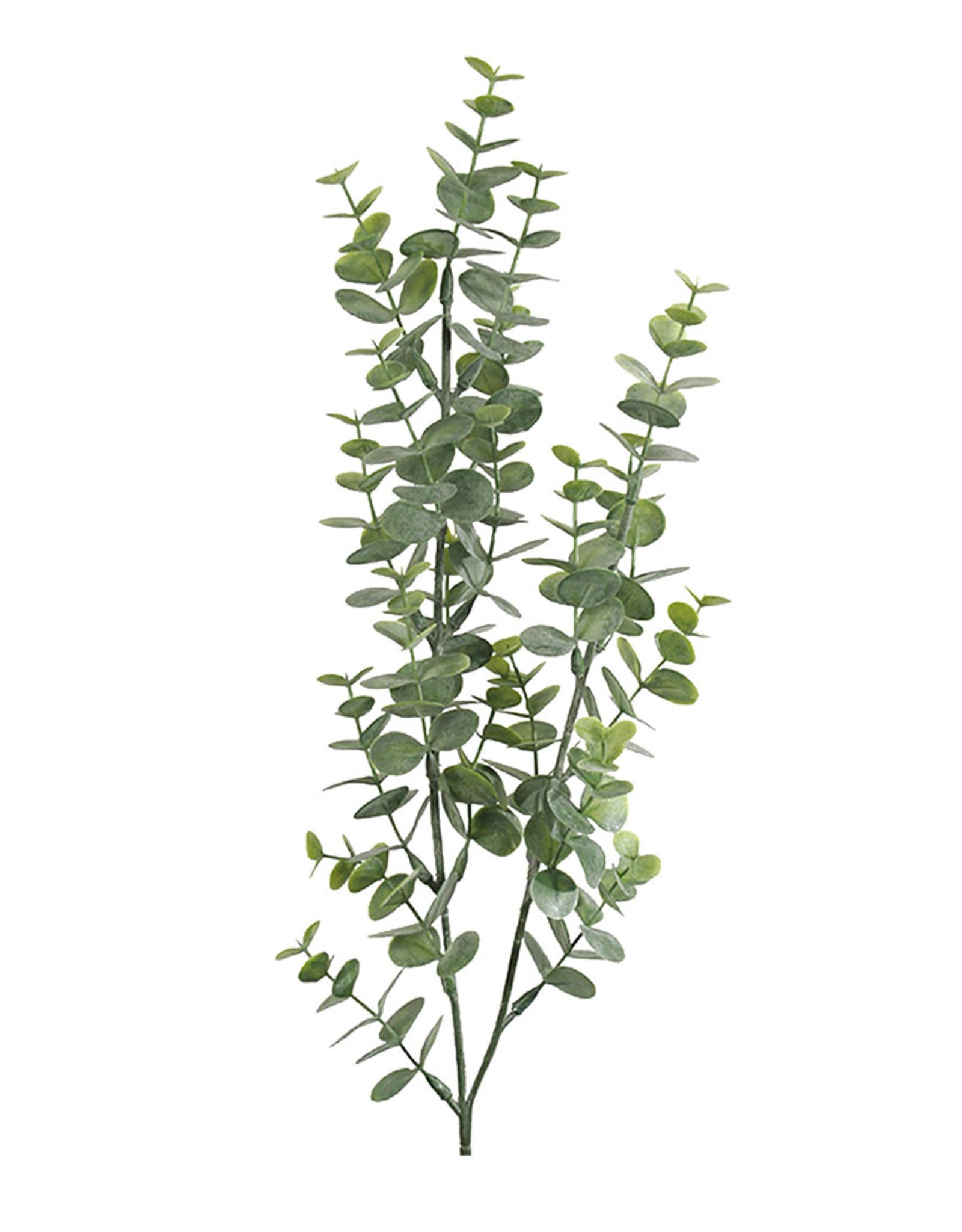 Mr Plant Mr Plant - Eucalyptus groen