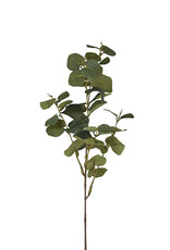 Mr Plant Mr Plant - Eucalytus med