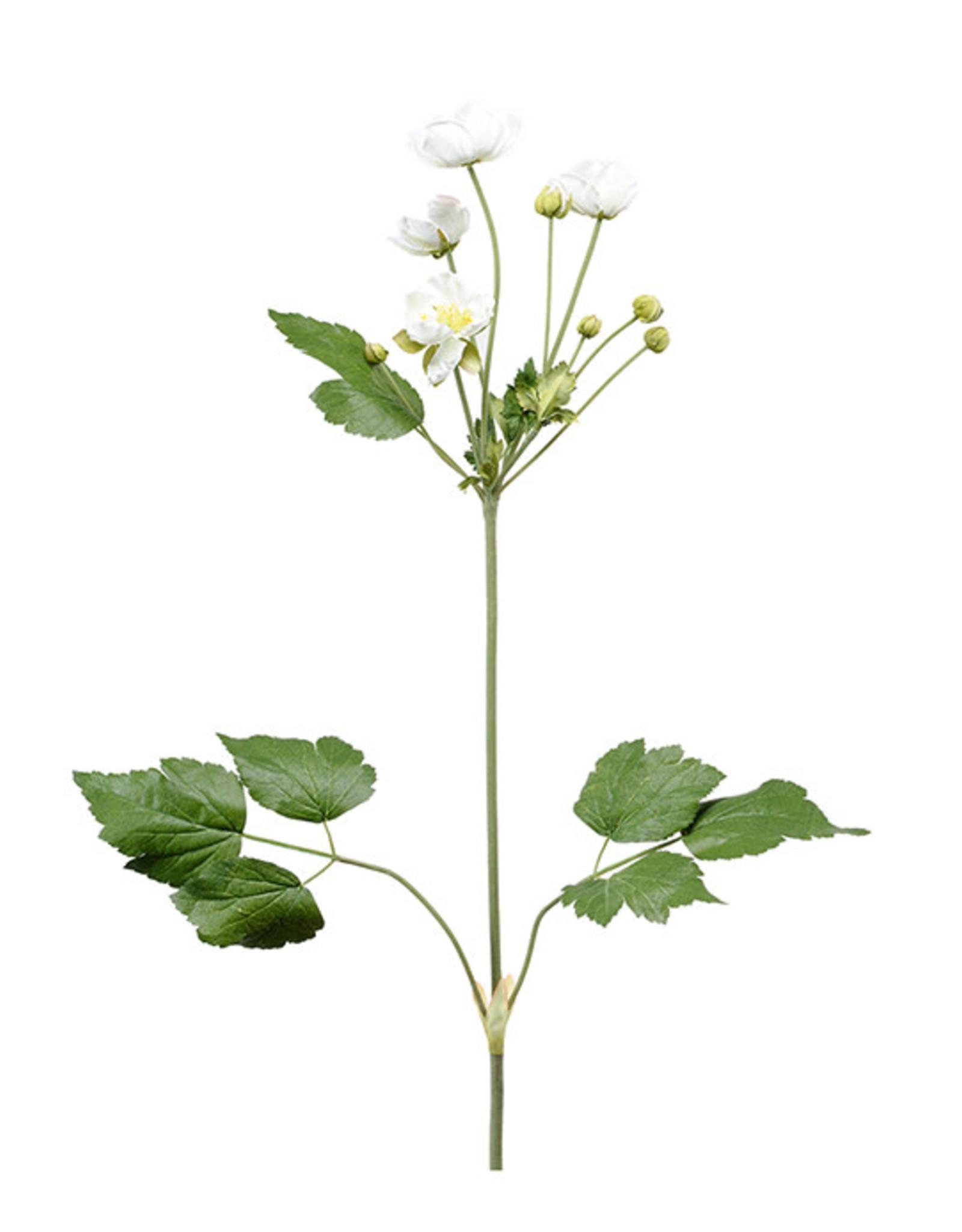 Mr Plant Mr Plant - Anemon