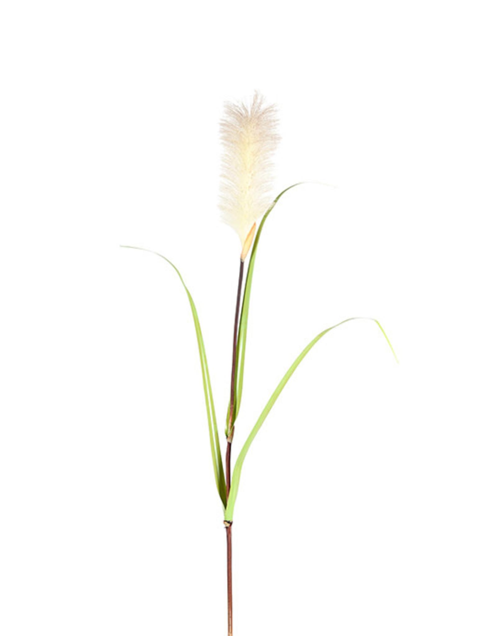 Mr Plant Mr Plant - Gras Large