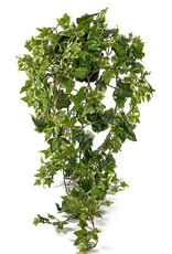Mr Plant Mr Plant - Murgrona