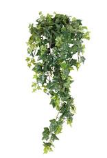 Mr Plant Mr Plant - Murgrona 2