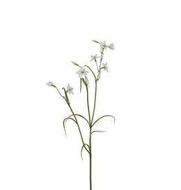 Mr Plant Mr Plant - Campanula wit