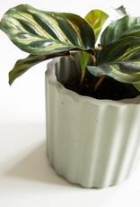 House Raccoon House Raccoon - Mila planter - Medium - silver green