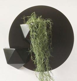 Groovy Magnets Groovy - Magnetische wandbakje ICO/ zwart