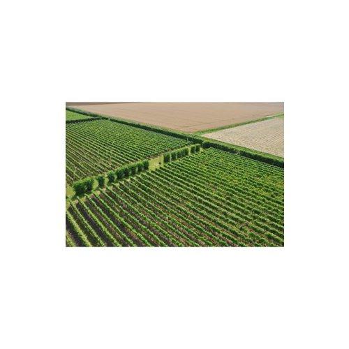 De Kleine Schorre Schouwen D®uiveland Barrique - Witte wijn