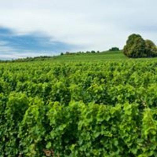 Neiss Pinot Grigio - Witte wijn