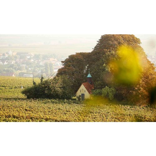 Neiss Weissburgunder – Bockenheim - Witte wijn