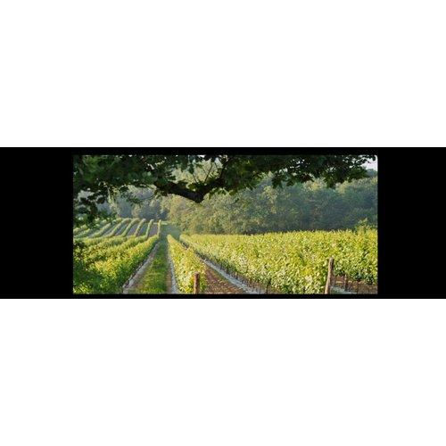 Domaine Horgelus Gros manseng & Sauvignon blanc - Witte wijn