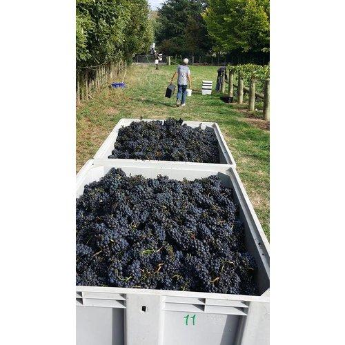 Borthwick  Pinot Noir - Rode wijn