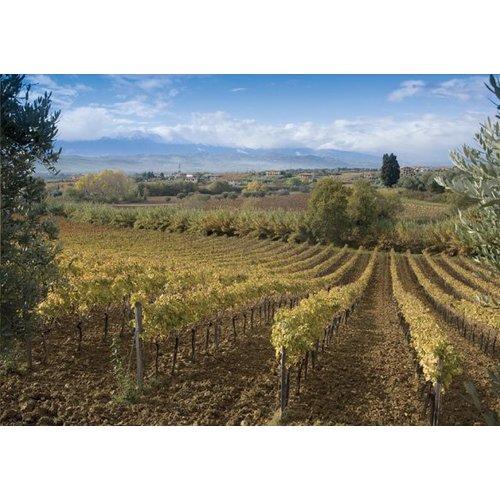 Orlandi Contucci Ponno Montepulciano D'Abruzzo – Rubiolo - Rode wijn