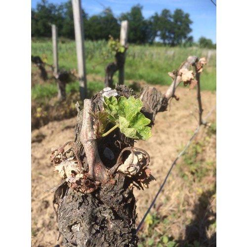 Vignobles Magnaudeix Vieux Chateau Pelletan – Saint Emilion Grand Cru - Rode wijn