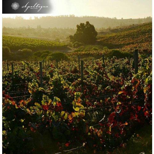 Pacifico Sur Carmenère - Rode wijn