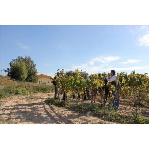 Bodegas Parató Cava Parato Brut Reserva - Mousserende wijn