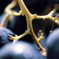 3 goede redenen om biologische wijnen te drinken