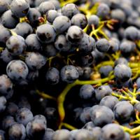 De 4 belangrijkste wijntrends van 2020