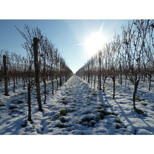 Betuws Wijndomein Linge Bruut - Mousserende wijn