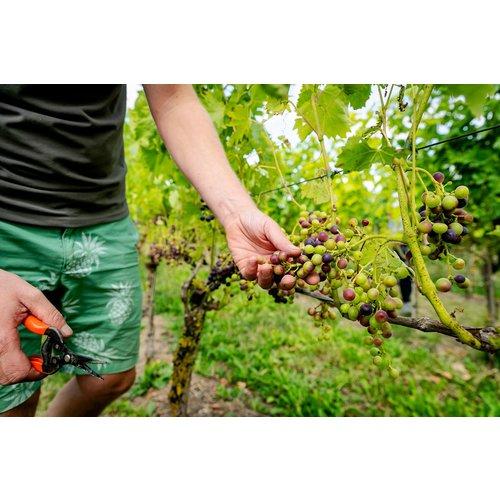 Betuws Wijndomein Linge Rood Cuvée Signature - Rode wijn