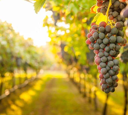 Alcoholvrije wijn