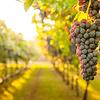 Wijnen tijdens corona: voor deze wijnen blijf jij écht wel thuis