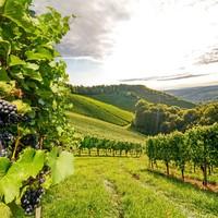 Deze witte wijnen passen perfect bij de zomer!