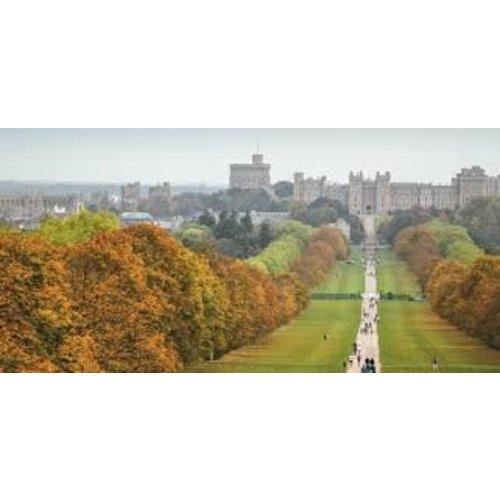 Windsor Great Park Vineyard
