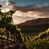 Argentijnse wijnen: zo divers als Argentinië zelf'