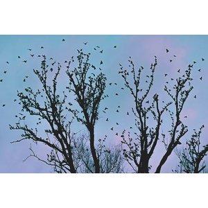Photo Wallpaper Foliage Birds