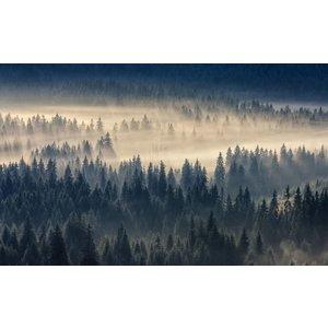Fotobehang Foggy Forest