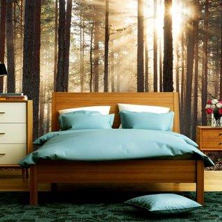 Selbstklebende Fototapete - Wald Sonnenaufgang 1