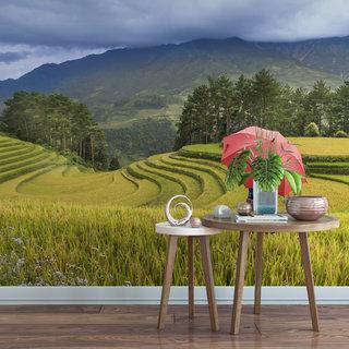 Selbstklebende Fototapete angepasst - Reisfelder 4