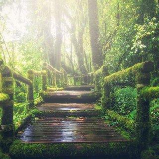 Selbstklebende Fototapete angepasst - Dschungel 2