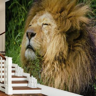 Selbstklebende Fototapete angepasst - Löwe in Farbe 1