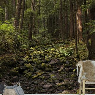 Selbstklebende Fototapete angepasst -  Waldweg