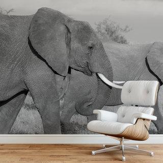 Selbstklebende Fototapete angepasst - Elefant