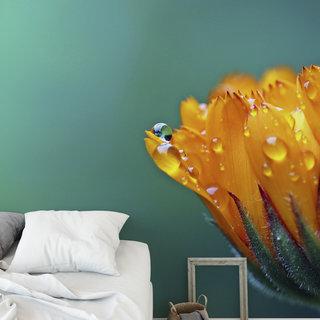 Zelfklevend fotobehang op maat - Goudsbloem