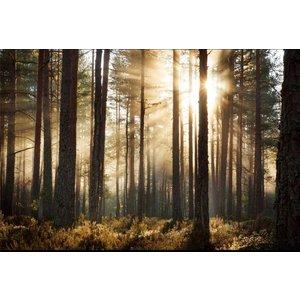 Zelfklevend Fotobehang Bos zonsopgang