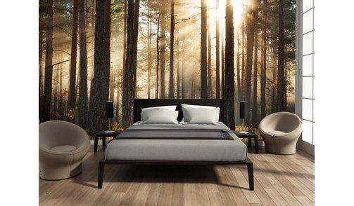 Photo wallpaper Forest sunrise