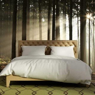 Self-adhesive photo wallpaper - Forest sunrise 2