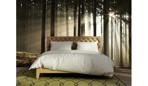 Self-adhesive photo wallpaper custom size - Forest sunrise 2