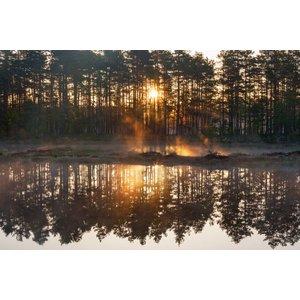 Zelfklevend Fotobehang Bos zonsondergang