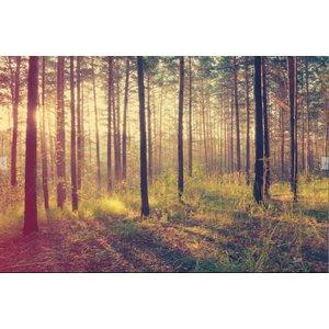 Fotobehang Bos zonsondergang - Herfst