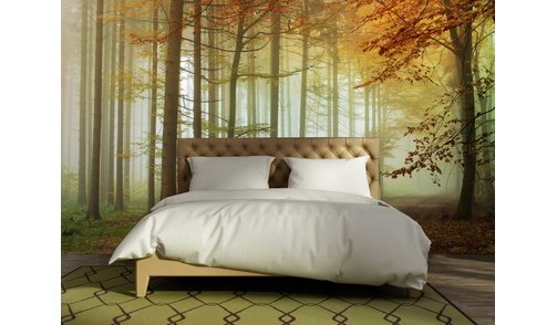 Self-adhesive photo wallpaper custom size - Forest Sundown - Autumn 2